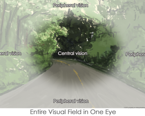 Peripheral Vision Field